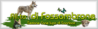 All.to di Fossombrone sez. Cane Lupo di Saarloos