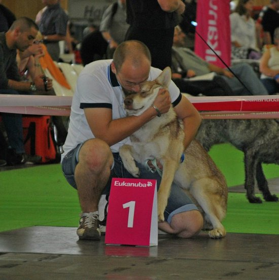 Brisingr di Fossombrone Best Puppy Saarloos in the World Dog Show