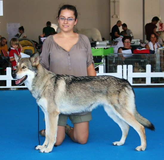 Best of breed Prima Lupa di Fossombrone 2012